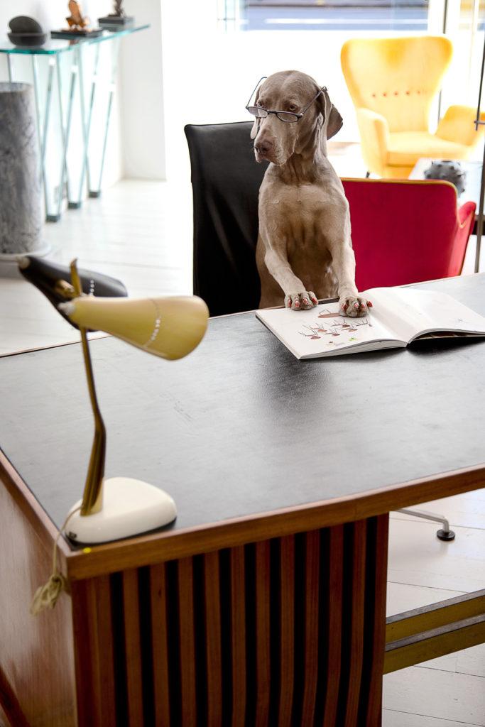 interior-styling-styledifortuna-3